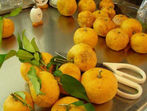 届いたばかりの柚子