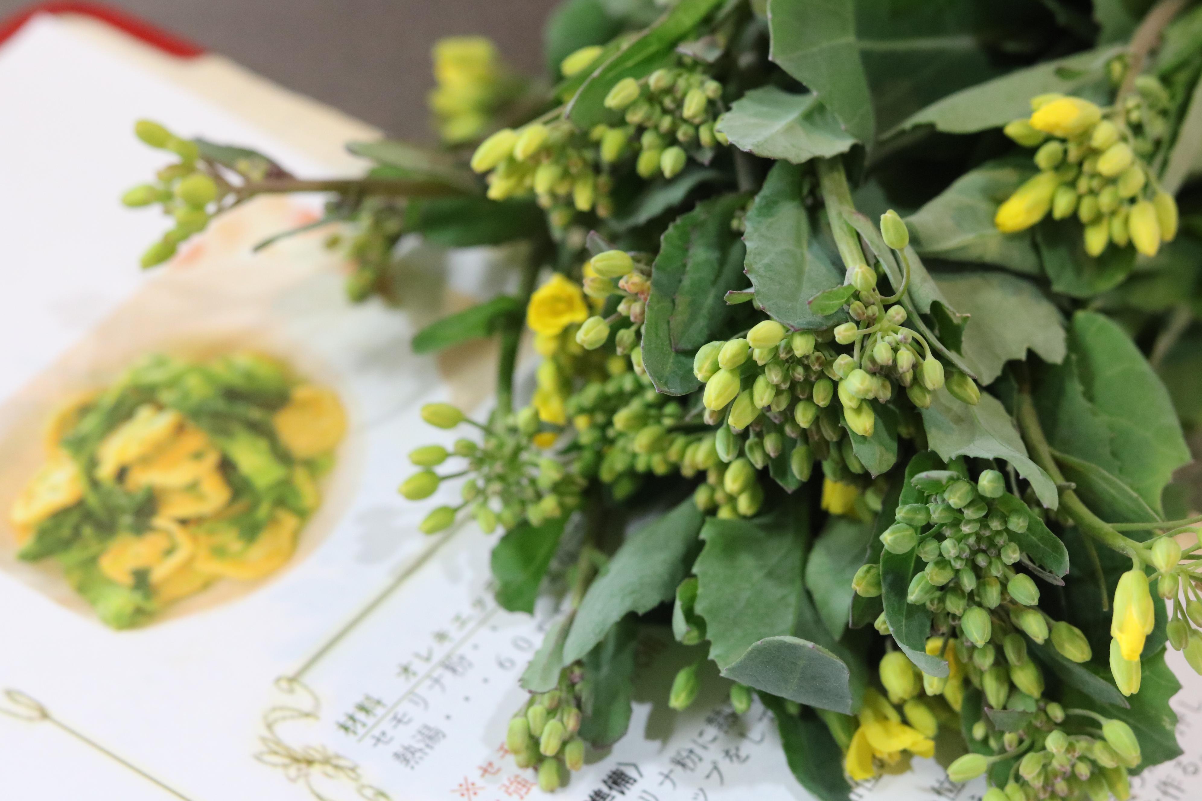 かき菜の菜花