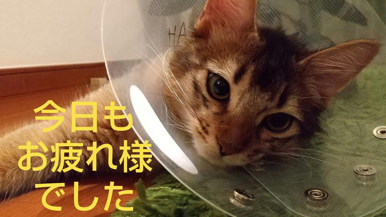 疲れを癒す子猫にご注意