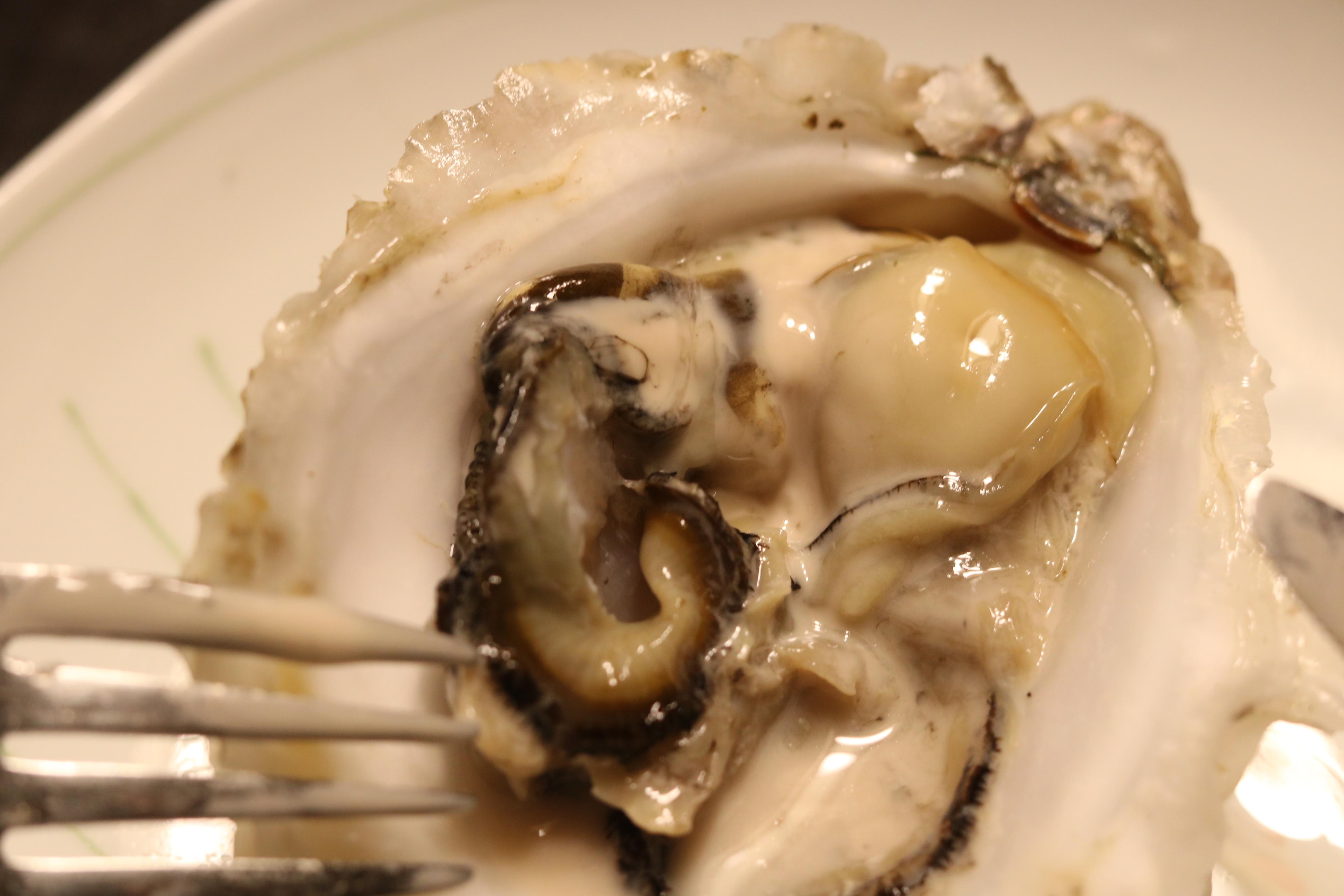 岩牡蠣から溢れ出る海のミルク