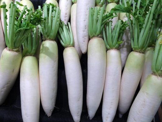 消化を助ける薬膳食材の大根