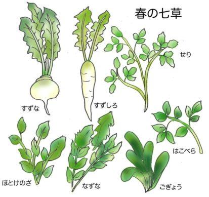 春の七草イラスト